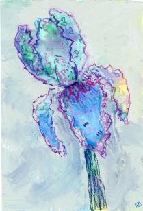 Iris001